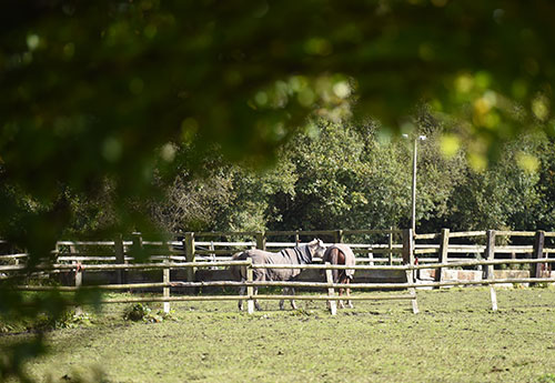 Horses in a field - diversification can turn rural land into houses