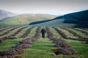 Scottish farmers growing their business through tree planting